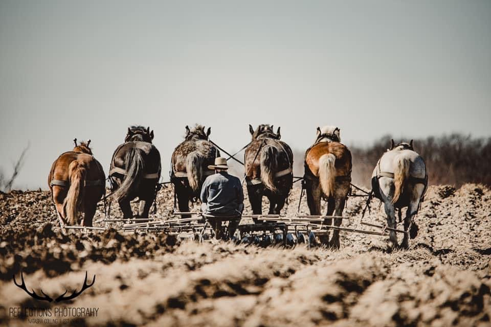 A photo taken by Natasha Colling featuring a man plowing with a team of six horses.